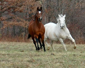 Photo: Two of our horses playing in the pasture in the late fall