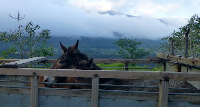 Photo: Bus passing a truck with donkeys (mules?)