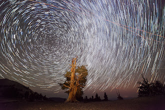 Photo: Star Trails and Perseid Meteors  I just tried a star trails action to combine 44 shots I took last year.  Most of the streaks are airplanes, but you can see a few meteors just to the left of the tree.  This year the shower will peak on Aug 12/13, but it runs for several weeks and can be productive to particularly productive to shoot for several days in the Aug 11-14 timeframe.  This year will be better than last due to a slim crescent moon that will not be bright enough to wipe out the meteors.