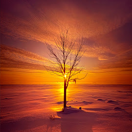One Is The Loneliest Number by Phil Koch - Landscapes Sunsets & Sunrises ( trending, country, shadow, rural, office, scenic, hope, canon, beautiful, weather, season, sky, emotions, natural, inspired, heaven, morning, light, peace, dawn, photography, love, sunrise, mood, vertical, clouds, fineart, sun, life, colors, unity, joy, lines, popular, arts, meadow, art, living, nature, inspirational, dramatic, portrait, horizons, environment, outdoors, sunset, earth, serene, landscape,  )