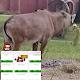 BullSHOT Bingo Android apk
