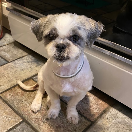 Do you know my owner?, FOUND Dec 8, 2019