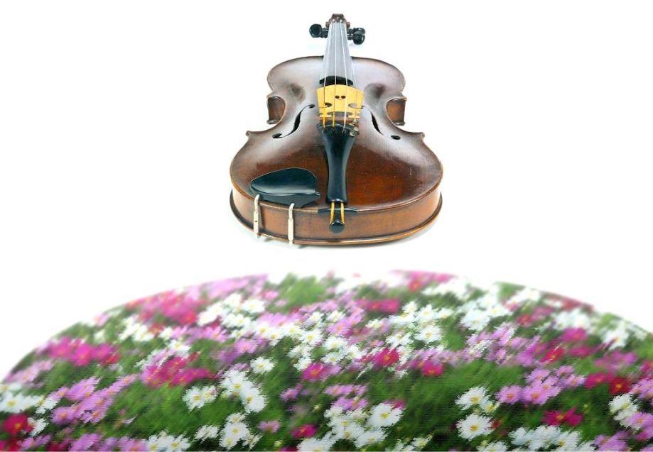 """""""Violino e Primavera"""" celebrados no Museu"""