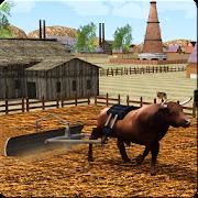 Bull Farming