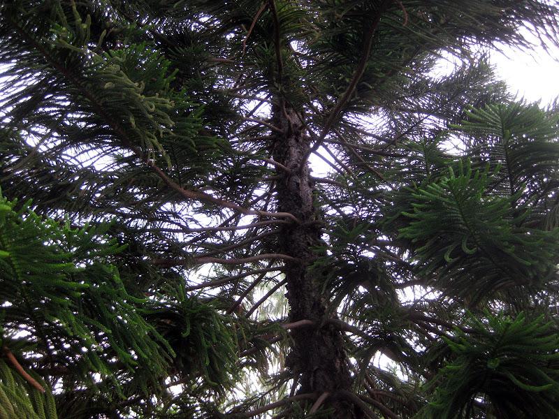 Photo: árbol del jardin de mi mamá