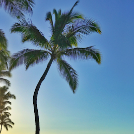 Aloha from the Big Island of Hawaii  by Kathy Dee - Landscapes Travel ( sky, palm tree, ocean, hawaii, big island, relax, water )