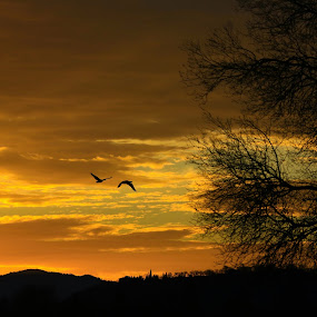 Awesome Morning by Todd Ratisseau - Landscapes Sunsets & Sunrises ( s.oregon, ocean in the sky, oregon sunrise, beauty, geese )