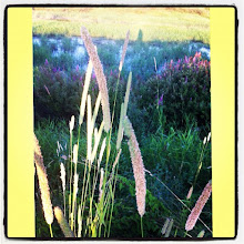 Photo: Lake plants #intercer #lake #plant #nature #instanature #yellow #plants #field #green #outdoor #fresh #outdoors - via Instagram, http://instagr.am/p/NUcrFXpfr0/