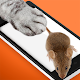 Slap fluffy mouse ? squeak (game)