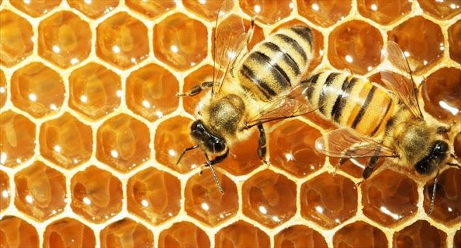 Allergy Season: Herb Infused Honey