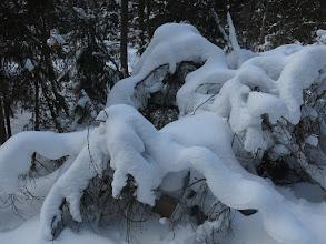 Photo: Снежная каракатица