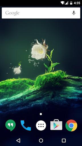 幽雅白色曇花與精靈動態桌布