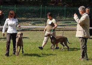 Photo: ARCO Good Dog i AZAF Łagiewnicki Las