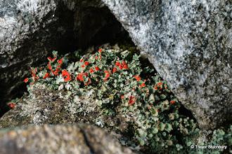 Photo: Lichens at Cairn near Summit of Benaquhallie