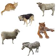 Animals in Five Languages