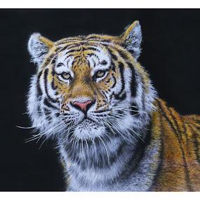 Tigre I by Kile Zabala - Drawing All Drawing