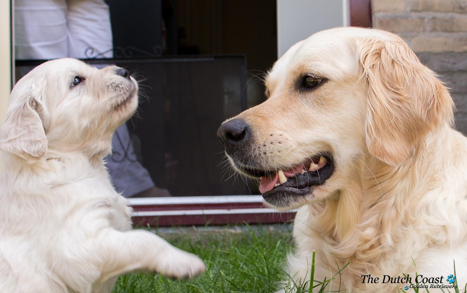 Eef&pups