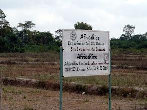 Photo: où le riz se cultive de façon expérimentale, le coton semblant disparaître peu à peu dans cette région