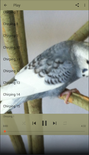 Chirping Parakeets - náhled