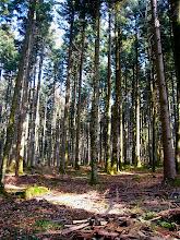 Photo: Maintenant, on va rester dans la forêt pour le reste de la journée