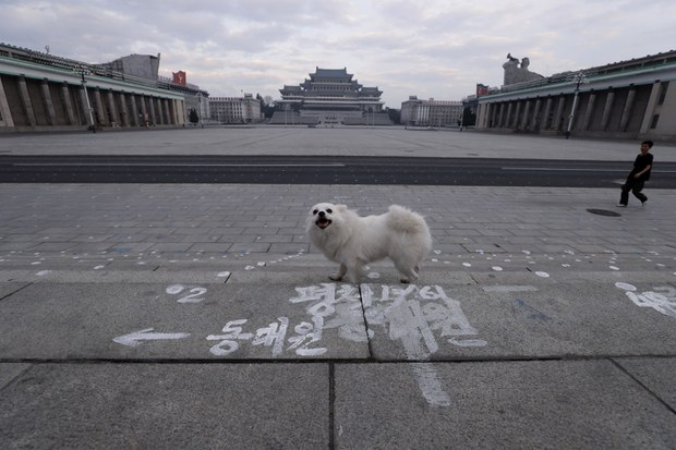 North Korea Orders Military Officials to Host 'Soldiers' Day' Dog Meat Feast