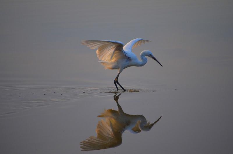 Parco ornitologico in Provenza di Mar955