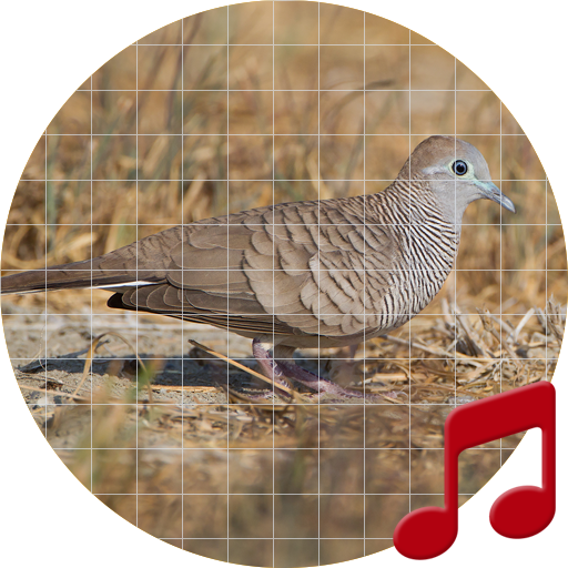 Zebra dove Sounds ~ Sboard pro - Apps on Google Play