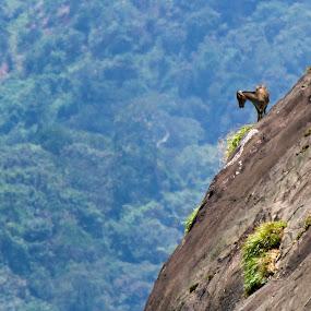 Munnar....... by Madhu Soodanan - Landscapes Mountains & Hills