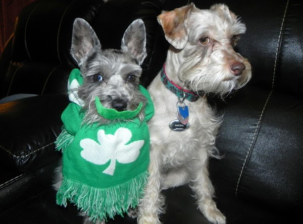 Miss Tibby and her brother Paczki on St. Paddy's Day 2013