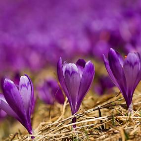 Primavera by Adrian Urbanek - Flowers Flowers in the Wild