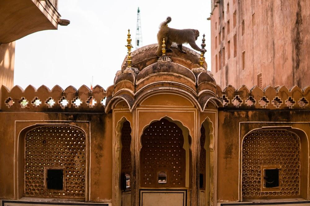 Monkey at the Hawa Mahal