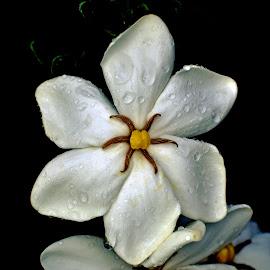 by Mark Luftig - Flowers Single Flower