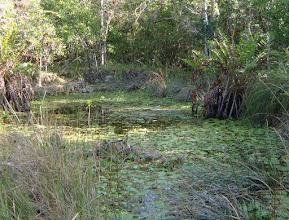 Photo: #7 Kary's Pond, Feb.16, 2003