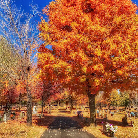 Maplewood Cemetery  by Vaquessa Sartin - City,  Street & Park  Cemeteries ( fall cemetery nature )