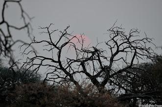 Photo: A storm brewing very far away. Sunset, Haak en Steek waterhole,  Mokala National Park.