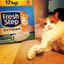 Photo: Mr. Tom with his @FreshStep box #intercer #cat #cats #catsofinstagram #petsofinstagram #pet #pets #freshstep #litter #clean #funny #beautiful #pretty #life - via Instagram, http://ift.tt/1yZpgGj