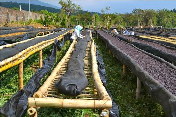 Sử dụng những vật liệu bằng tre, gỗ làm giá phơi – phơi luôn cả cà phê quả
