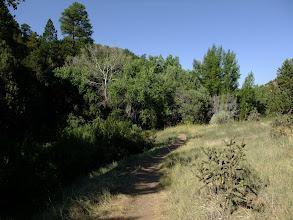 Photo: Riparian area along a small stream