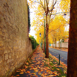 Along the autumn alley  by Svetlana Saenkova - City,  Street & Park  City Parks ( autumn colours, season, autumn leaves, autumn,  )