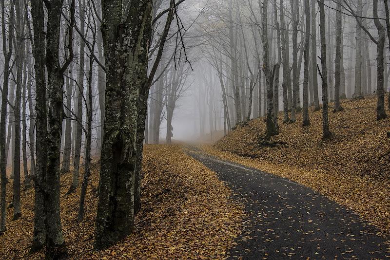 Verso la Nebbia d'Autunno di samuele.laurenzi