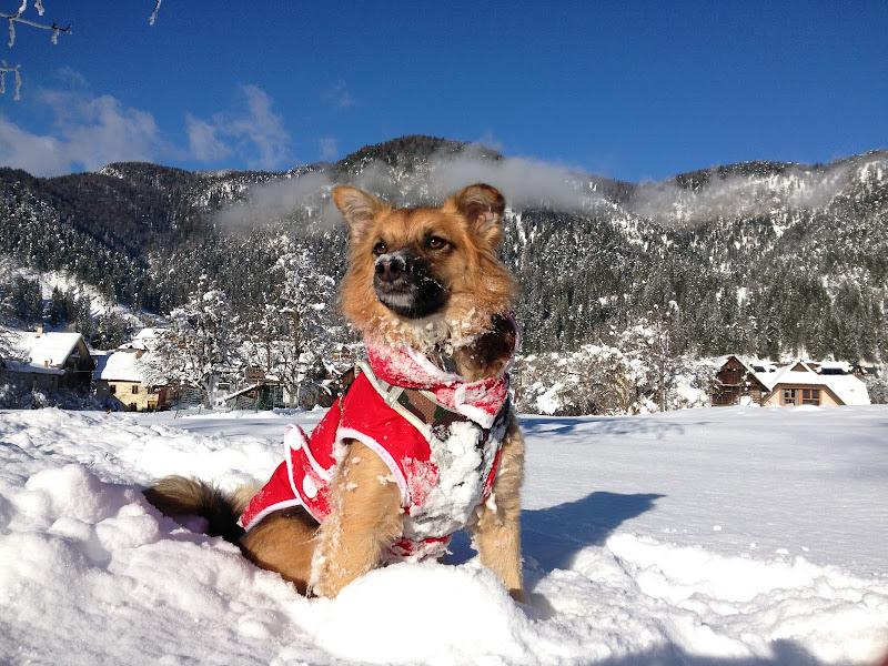 Il cane delle nevi di BinnutSD