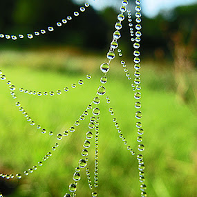 Glistening Jewels by JoAnn Palmer - Artistic Objects Other Objects ( nature, dew, art, fine art, spider, web, spider web )