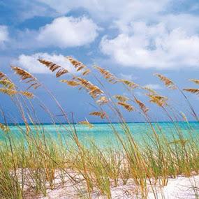 Rehoboth Bay, DE by Margaret Whitesides - Landscapes Beaches