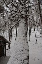 Photo: Po včerajšom snežení je všetko obalené sypkým snehom