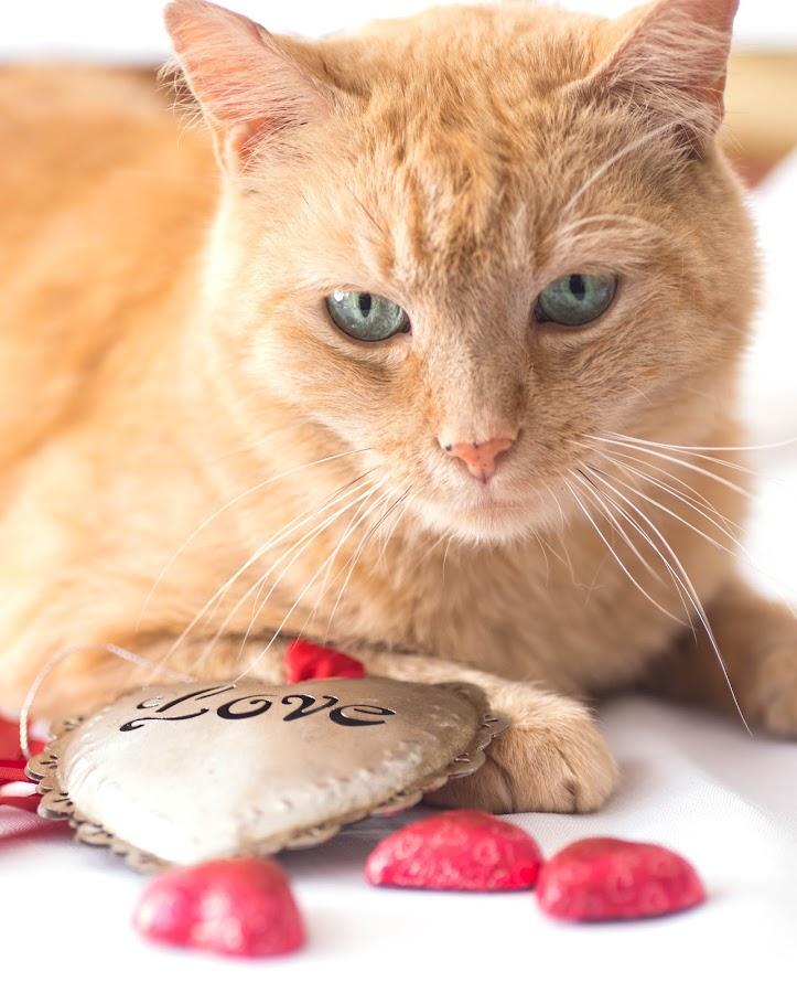 Lucky Romeo. by Susan Pretorius - Animals - Cats Portraits (  )