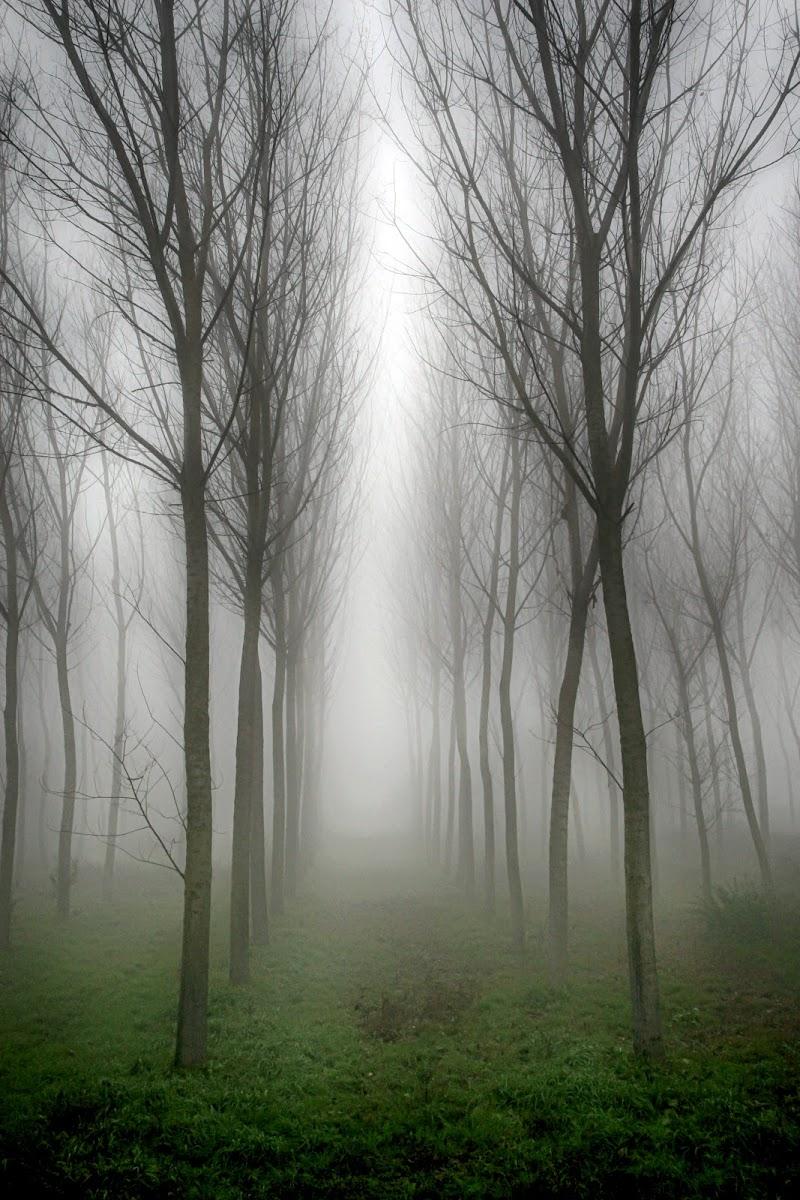 Nebbia nel pioppeto di Fotodiale