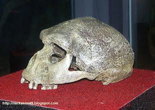 Photo: Tengkorak Homo Sapiens, hidup 40000 - 25000 tahun yang lalu yang mendiami Indonesia. Koleksi UPTD Museum Negeri Propinsi Sulawesi Utara di Manado. http://nurkasim49.blogspot.in