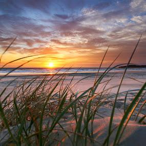 From The Grass by Geoffrey Wols - Landscapes Sunsets & Sunrises ( colour, airforce beach, dunes, grass, sunset, australia, evans head, beach, sunrise, sun,  )