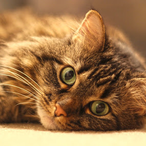 Cat Eyes by Eric Wellman - Animals - Cats Portraits ( cat, cat eyes, kitty, eyes,  )