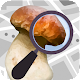 Mushroom Identify - Automatic picture recognition Apk